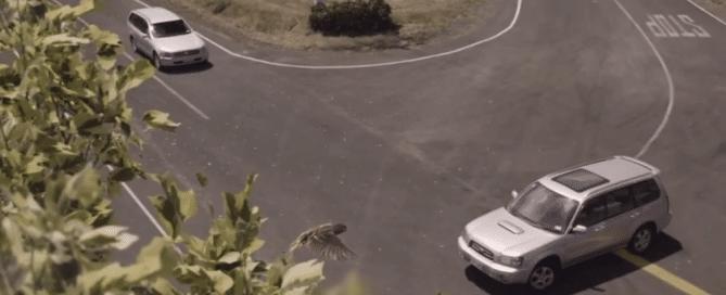 spot neo-zelandais
